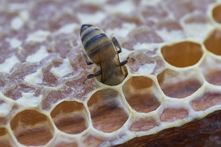 The back half of a bee is visible crawling out of a honeycomb